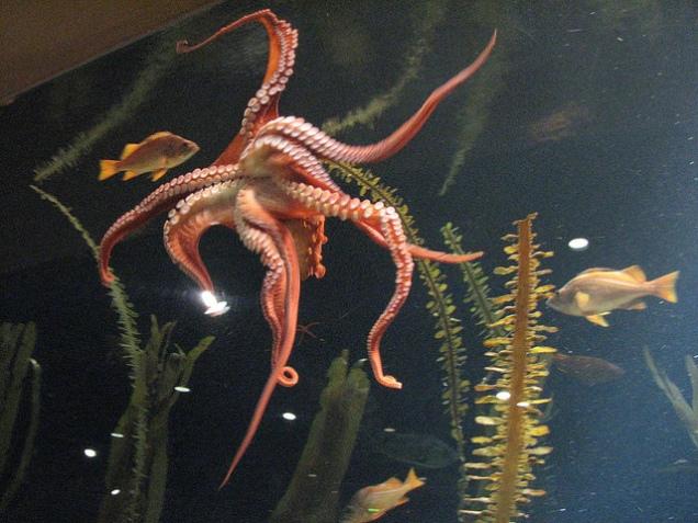 Octopusjpg