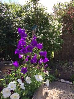 Summer flowers2